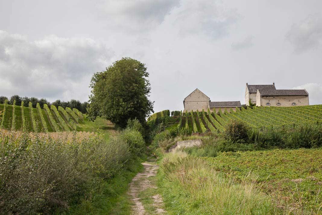 Wijnwandelen in het Jekerdal
