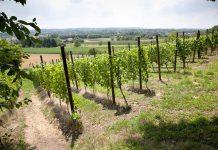 Wandelen rond de Wijngaardberg