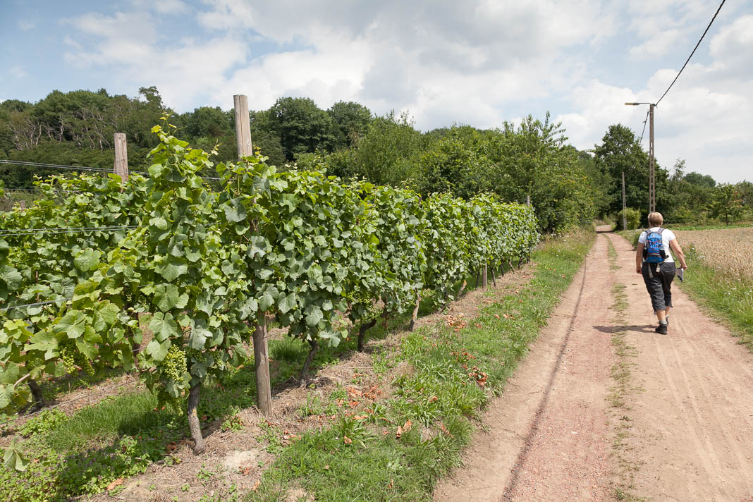 wijnwandelen België