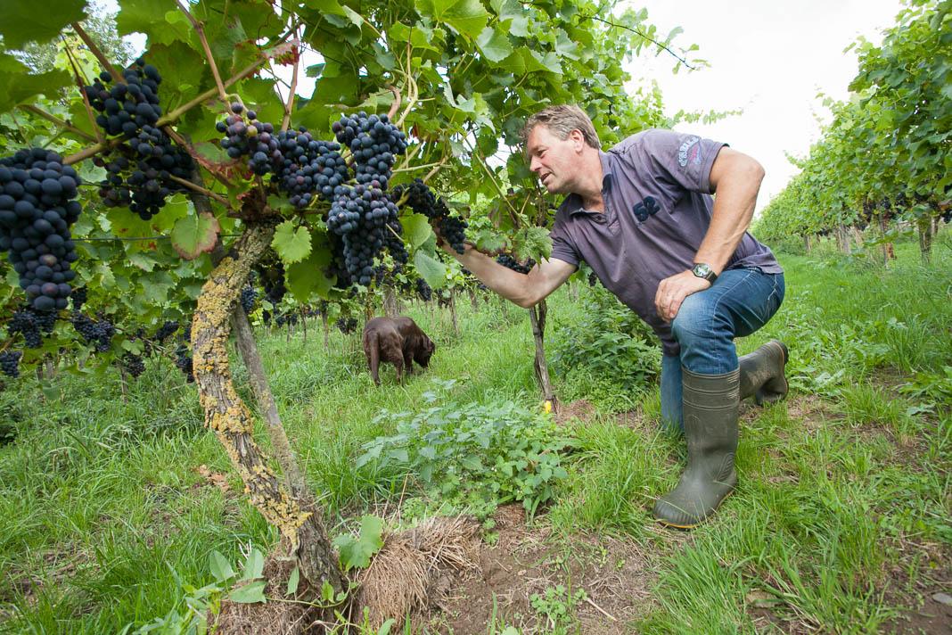 Leon Masselink van wijngaard 't Oerlegoed