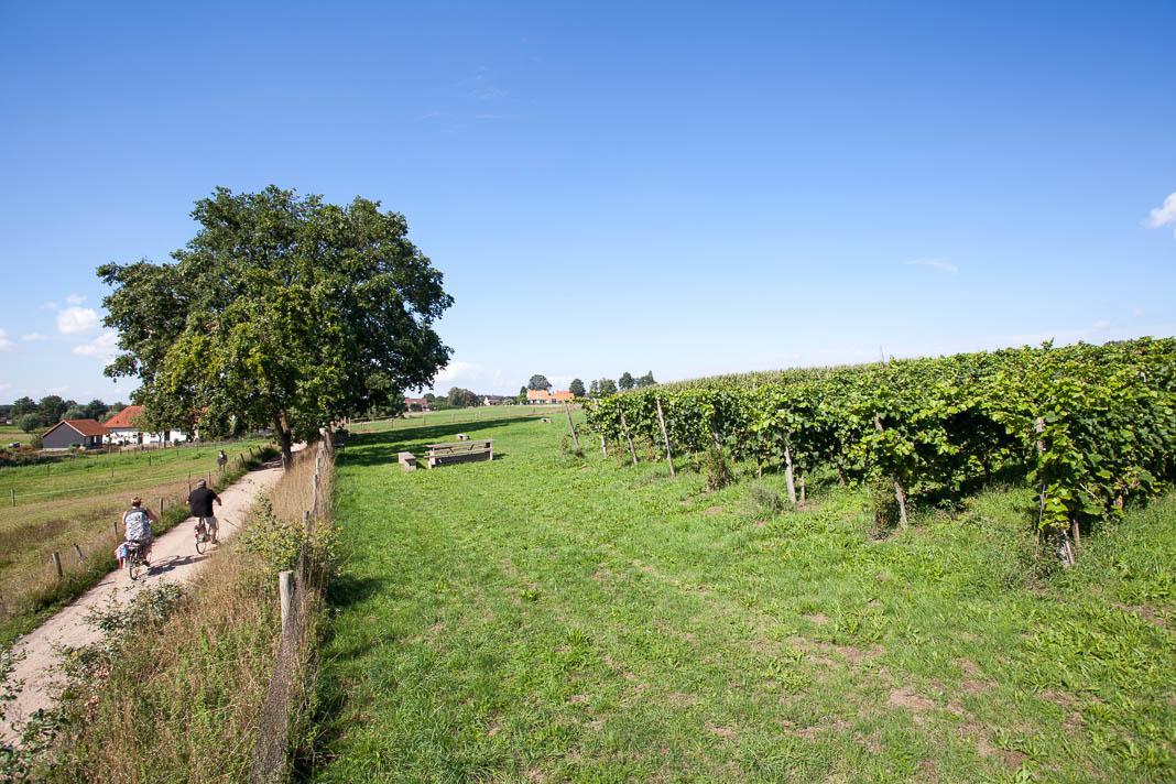 Fietsen langs Wijngaard Huis Bergh in Montferland