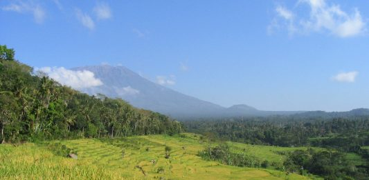 Rijstvelden op Bali