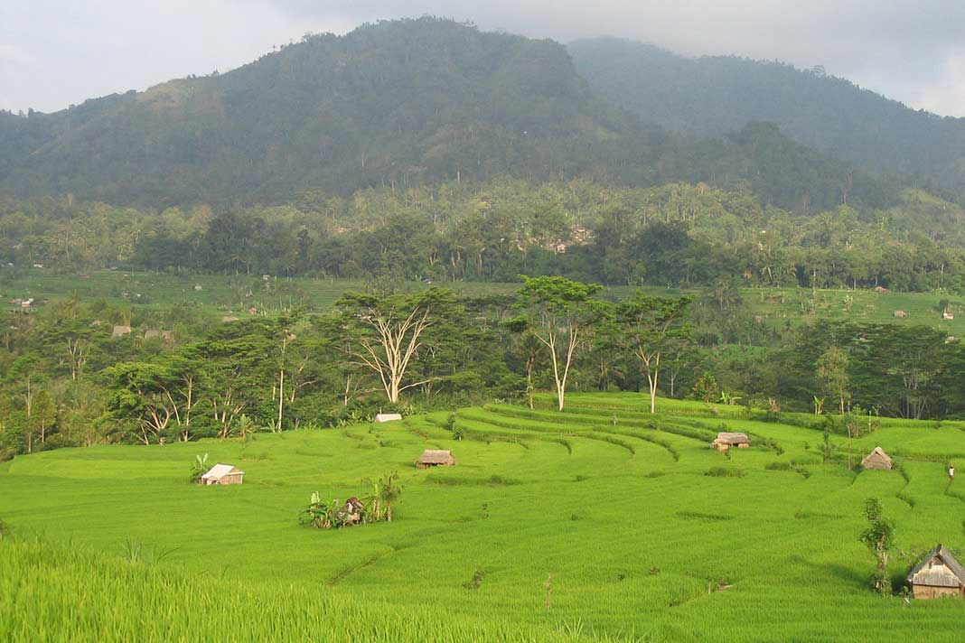 Rijstvelden, Bali