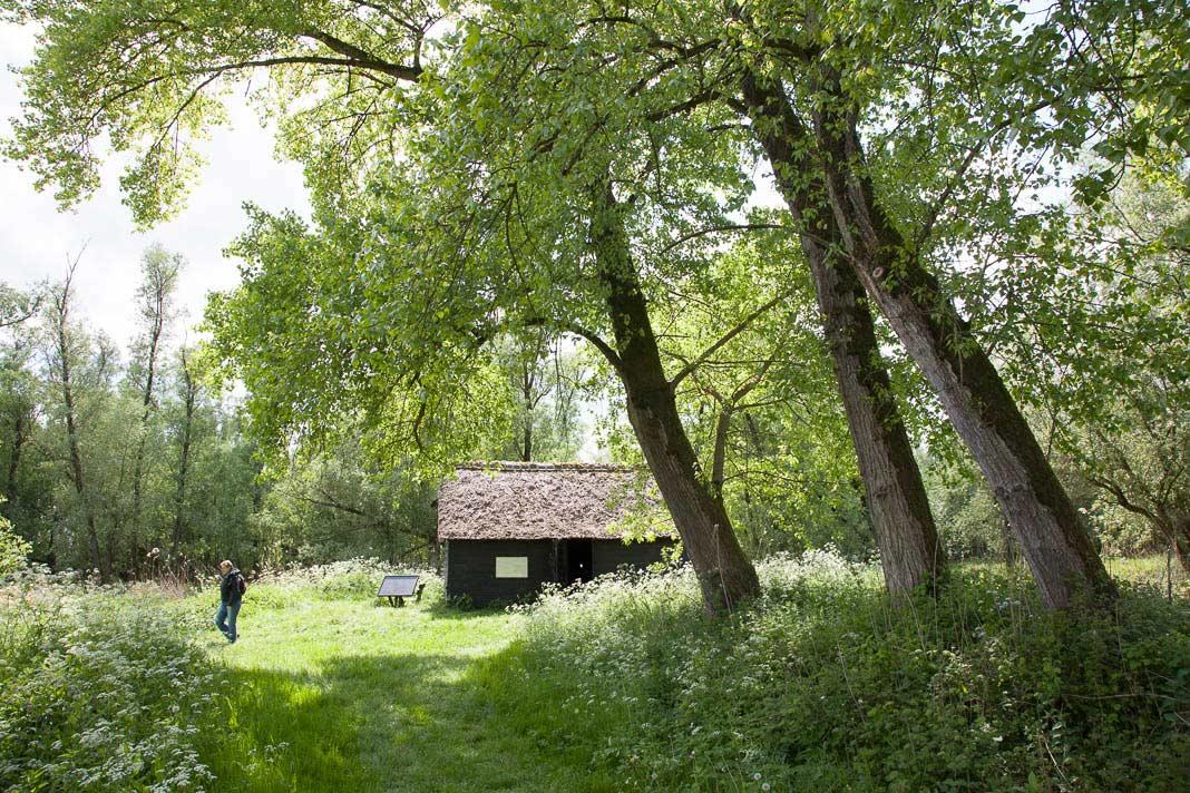 Griendwerkershut in de Hollandse Biesbosch