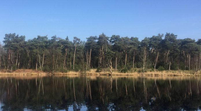 Ven in de Kampina, Noord-Brabant