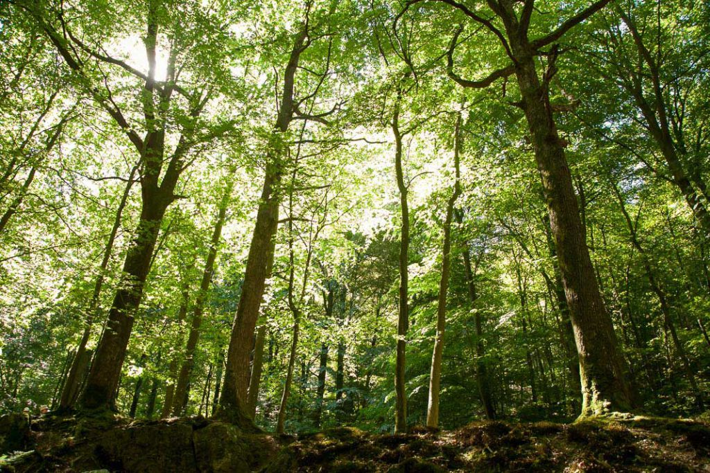 Ardennen, Het dal van de Ninglinspo