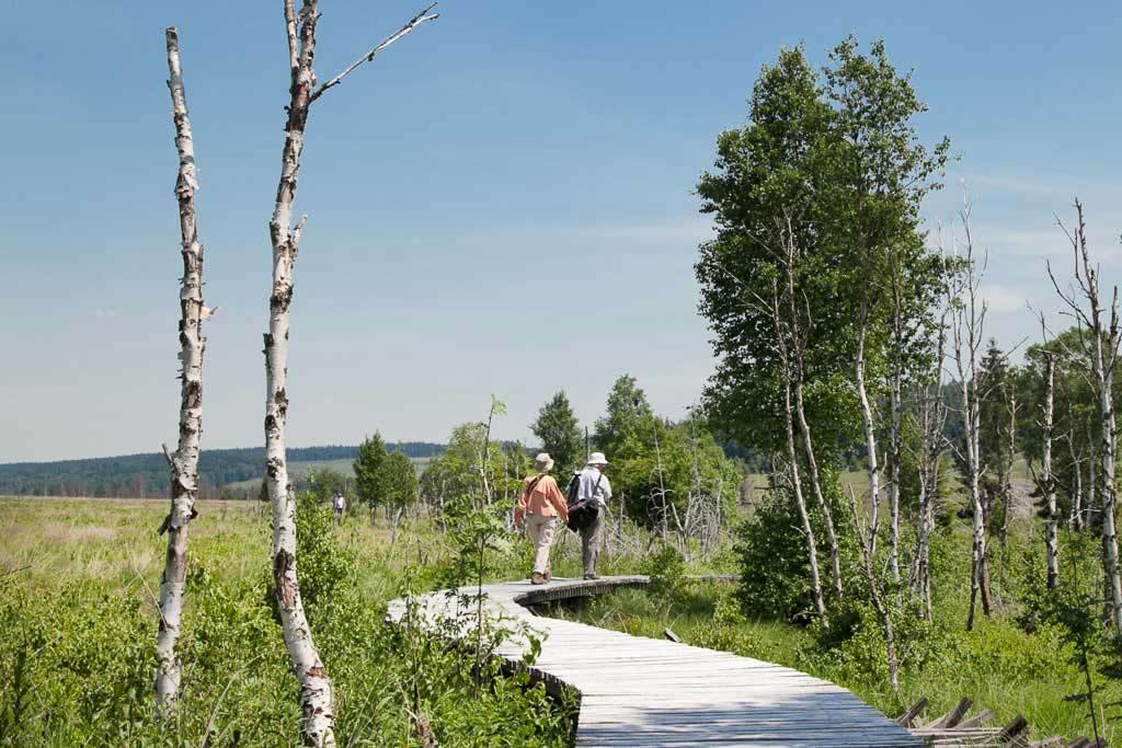 Wandelen in Nationaal Park de Hoge Venen