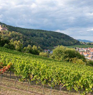 Burg Landeck