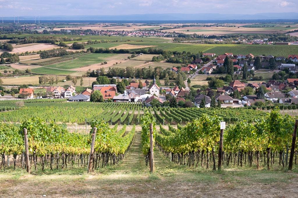 Wijnwandelen op de Deutsche Weinstrasse